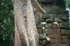 Ta Prohm Temple, Angkor, Cambodia