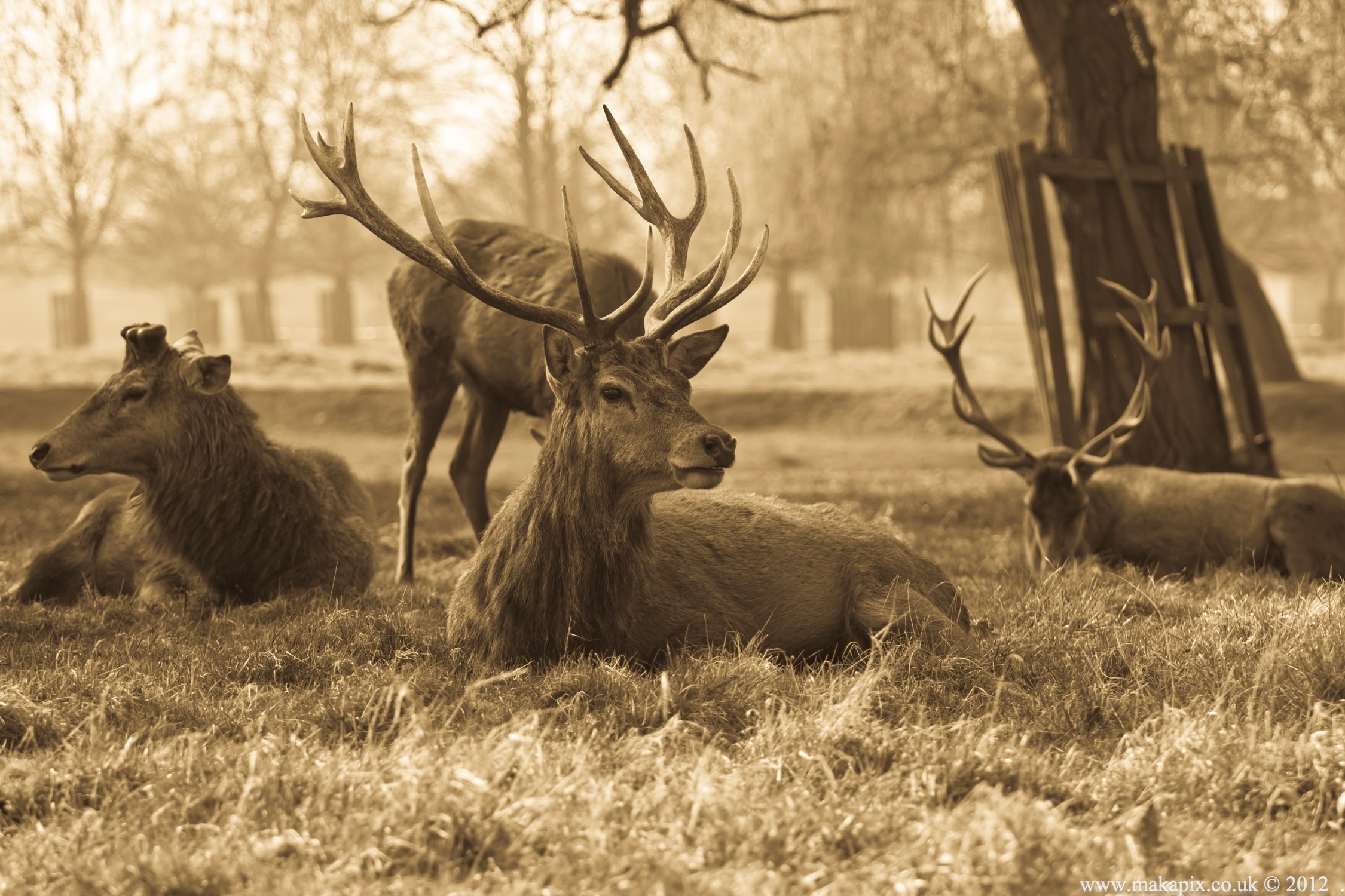 Bushy Park ,London UK 2012