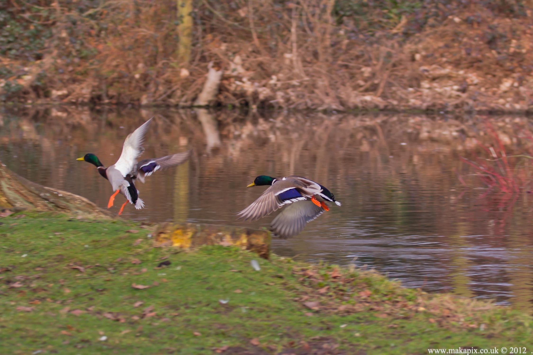 Bushy Park, Teddington