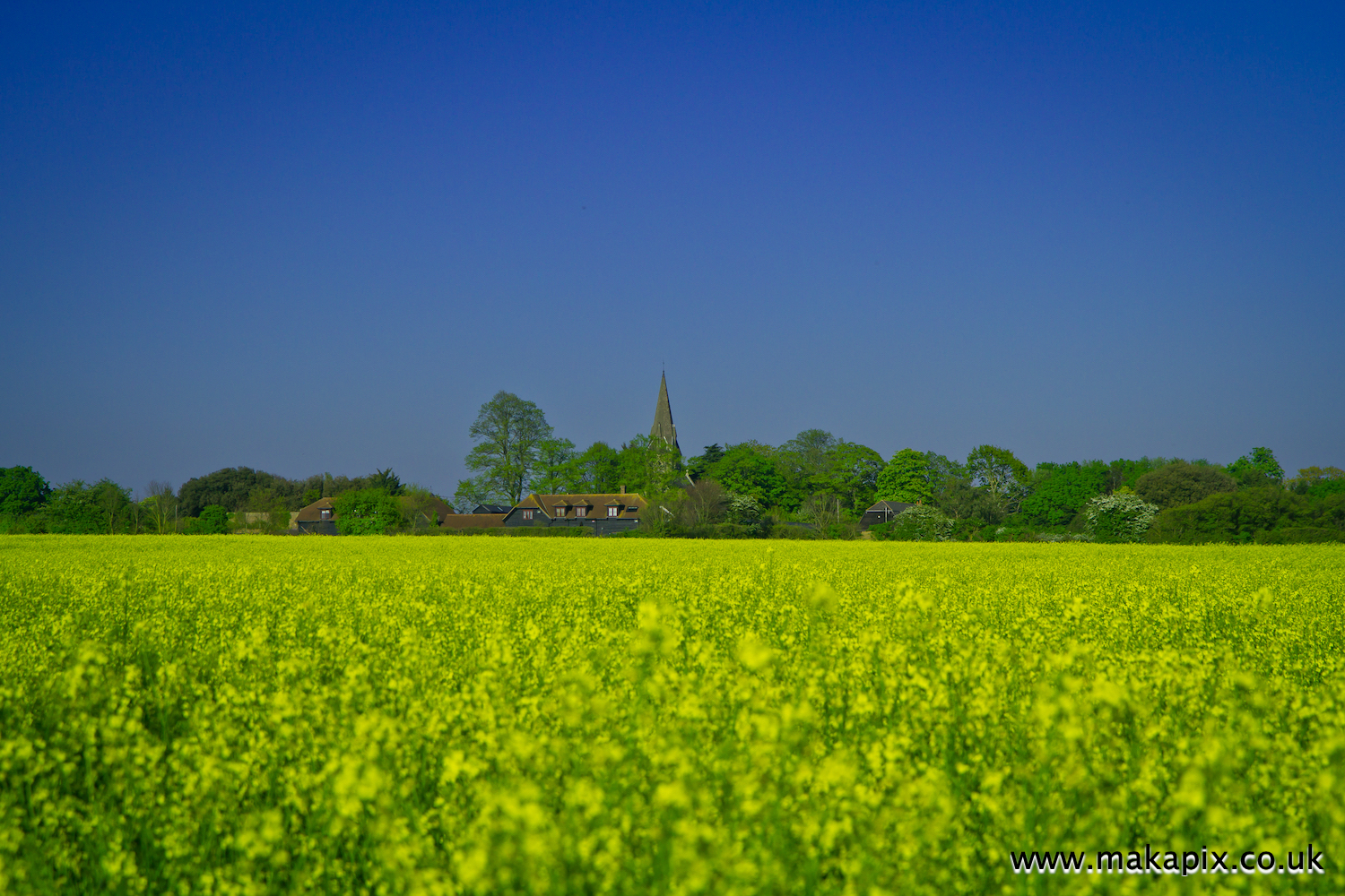 All Saints' Church and rapeseeds field in Upminster, Essex, England