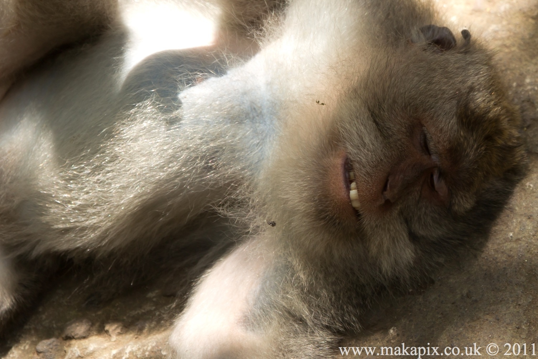indonesia 2011 animals