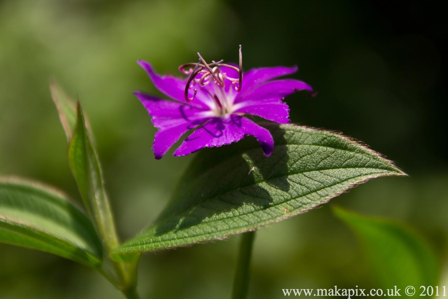 indonesia 2011 flowers&plants