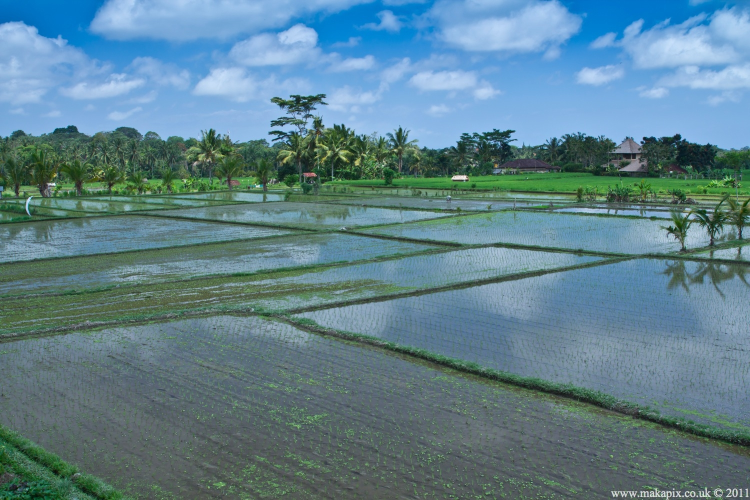 Makapix Travel Photography 187 Indonesia Rice Paddies