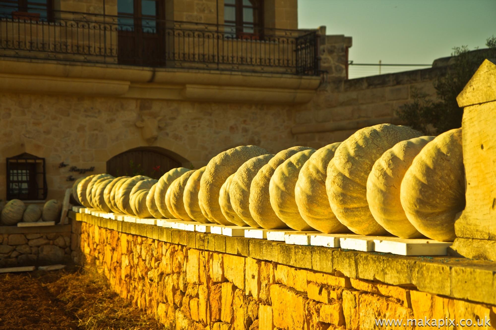 Malta-pumpkins 2014