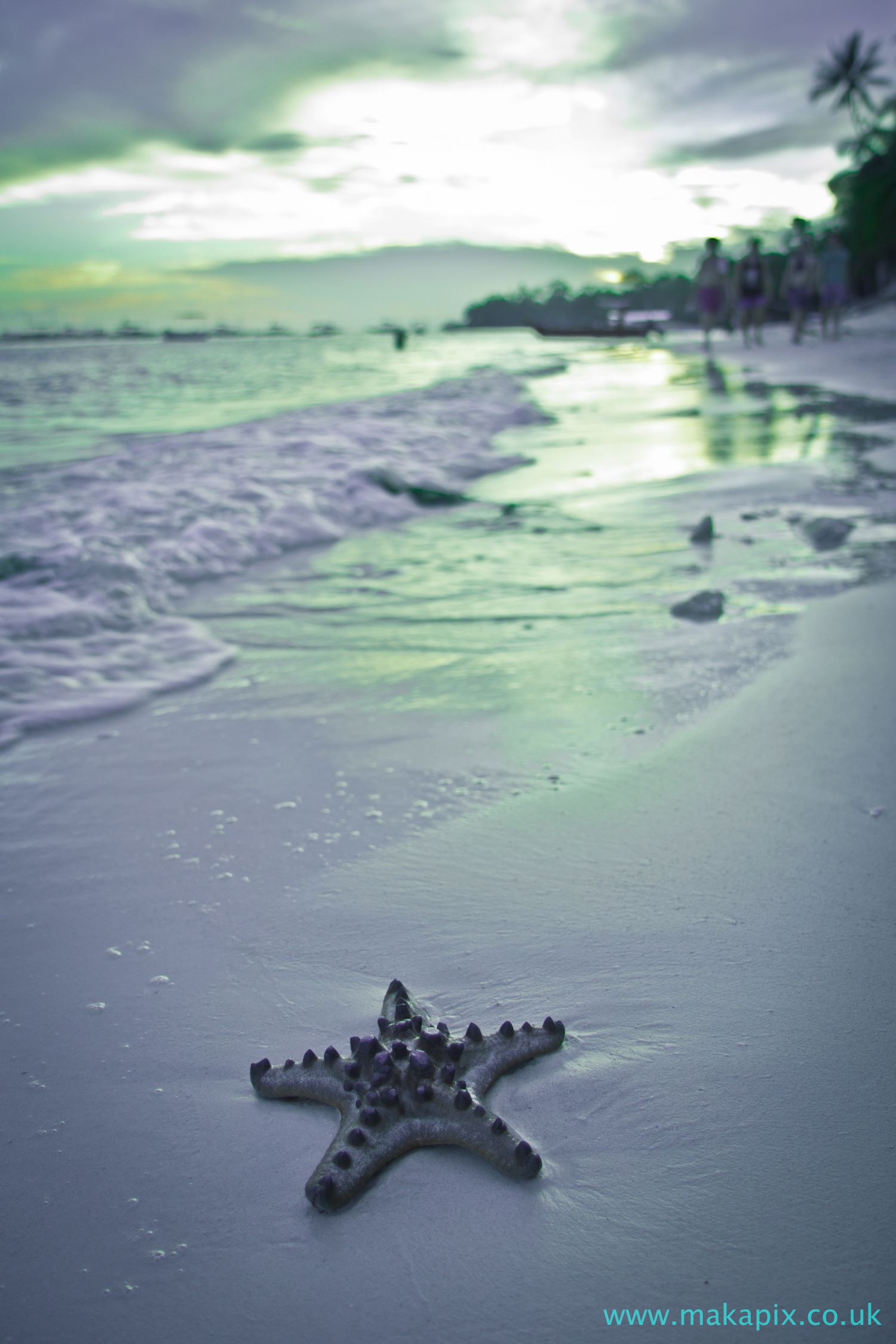 Starfish, Alona Beach